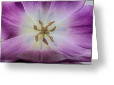 Soft Beauty Greeting Card