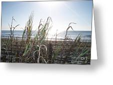 Soft Breezes  Greeting Card