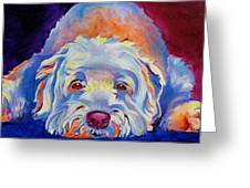 Soft Coated Wheaten Terrier Guinness Painting By Alicia