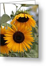 Soft Colors Sunflowers Greeting Card