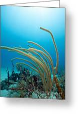 Soft Coral Underwater Greeting Card by Sami Sarkis