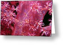 Soft Corals 8 Greeting Card