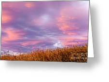 Soft Diffused Colourful Sunset Over Dry Grassland Greeting Card