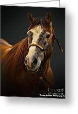 Soft Focus Horse Greeting Card