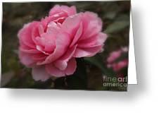 Soft Focus Pink Greeting Card