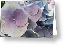 Soft Hydrangea  Greeting Card