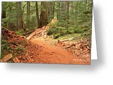 Soft Light Along The Cheakamus Lake Trail Greeting Card