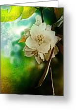 Soft Light Greeting Card