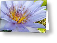 Soft Mauve Waterlily Greeting Card