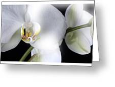 Soft Orchid Greeting Card