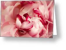 Soft Peony Greeting Card
