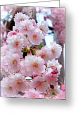Soft Pink Blossoms Greeting Card