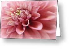 Soft Pink Dalia Greeting Card
