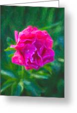 Soft Pink Peony Greeting Card