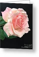 Soft Pink Rose 1 Greeting Card
