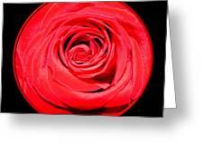 Soft Red Rose Closeup Greeting Card