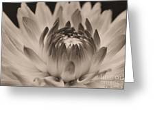 Soft Sepia Greeting Card