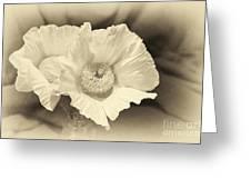 Soft Sepia White Poppy Matilija Flower Greeting Card