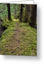 Soft Trail Greeting Card