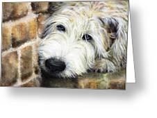 Soft Wheaten Terrier Greeting Card by Natasha Denger
