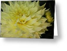 Soft Yellow Dahlia Greeting Card