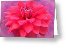 Softer Summer Dahlia Greeting Card