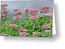 Softest Pink Greeting Card