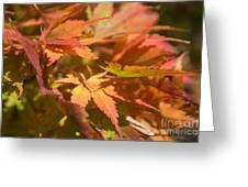 Softly Autumn Greeting Card
