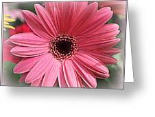 Softly In Pink - Zinnia Greeting Card