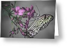 Softly Reflected On A Wing Greeting Card by Jill Balsam