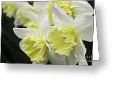 Softly Spring Greeting Card
