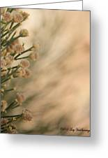 Softness In The Desert Greeting Card
