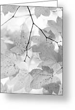 Softness Of Maple Leaves Monochrome Greeting Card