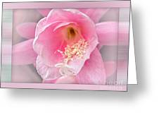 Soft..pink..delicate Greeting Card