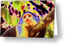 Solarized White-faced Monkey Greeting Card