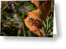 Soldier Bug Greeting Card