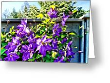 Solina Clematis On Fence Greeting Card