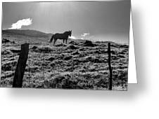 Equine Silhouette Greeting Card