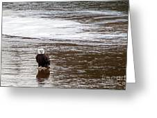 Solitary Eagle Greeting Card
