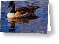 Solitary Goose Greeting Card