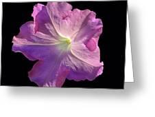 Solitary Pink Petunia Greeting Card