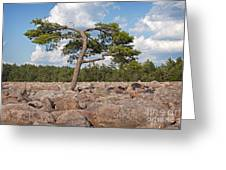 Solitary Tree Amidst Field Of Boulders Greeting Card