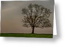 Solitary Tree Greeting Card