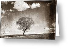 Solitary Tree In Limagne Landscape. Auvergne. France Greeting Card by Bernard Jaubert