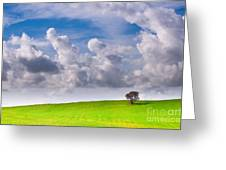 Solitary Trees Greeting Card