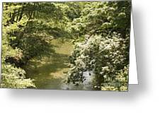 Solitary Waters Greeting Card
