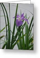 Solo Iris Greeting Card