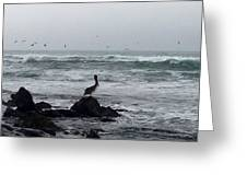 Solo Pelican Greeting Card