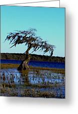 Solo Greeting Card by Will Boutin Photos