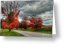 Some Fall Colors Greeting Card
